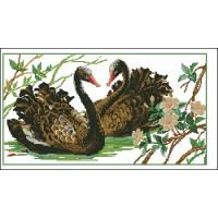 Blacks Swans