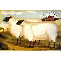 Two Fat Suffolk Lambs
