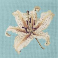 Oriental Lily