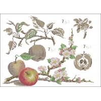 Botanical-Apples